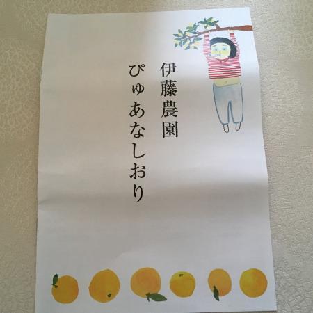 手剥き甘夏ふるさと納税8/15 8