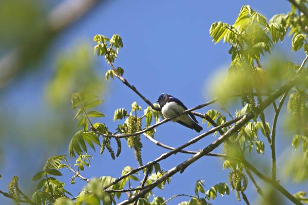 kimsbird14806.jpg
