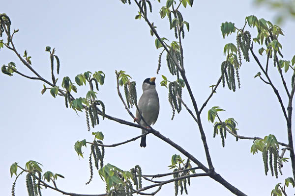 kimsbird14818.jpg