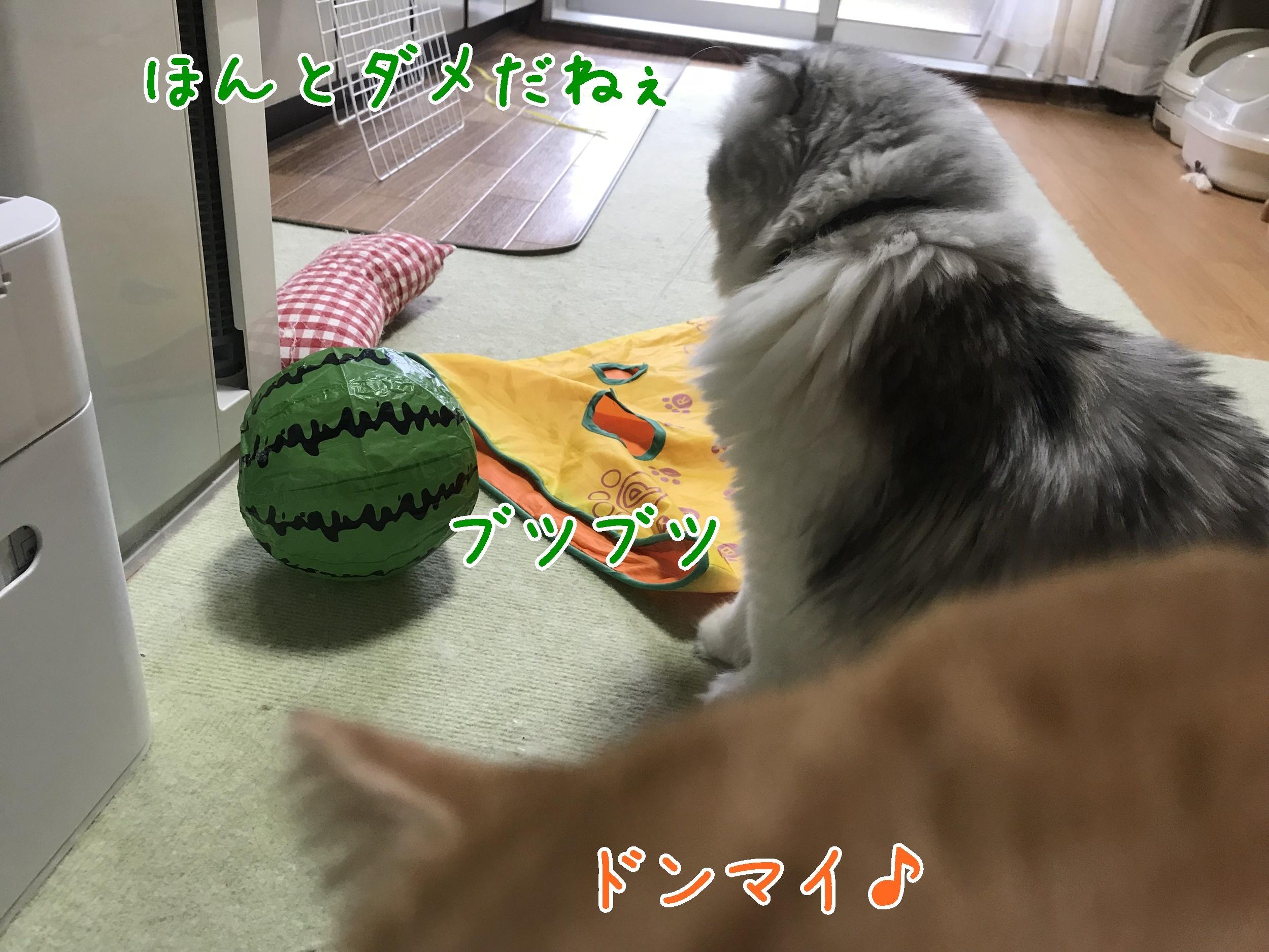 20180808-171510-01.jpg