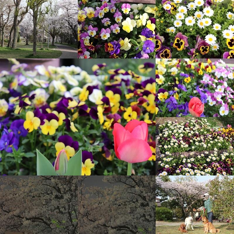 昼のお散歩。桜と撮影3