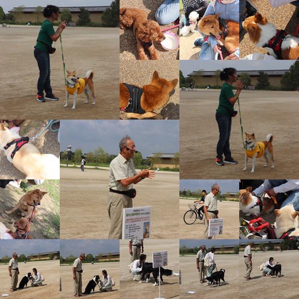 愛犬教室5