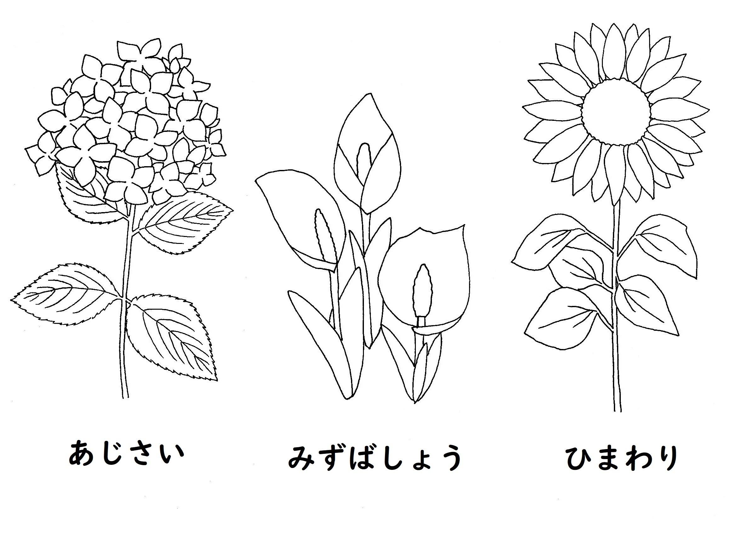 nurie-hana3.jpg