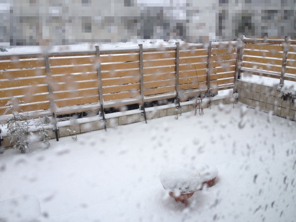 IMG_0636_雪