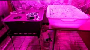 水耕栽培層の棚