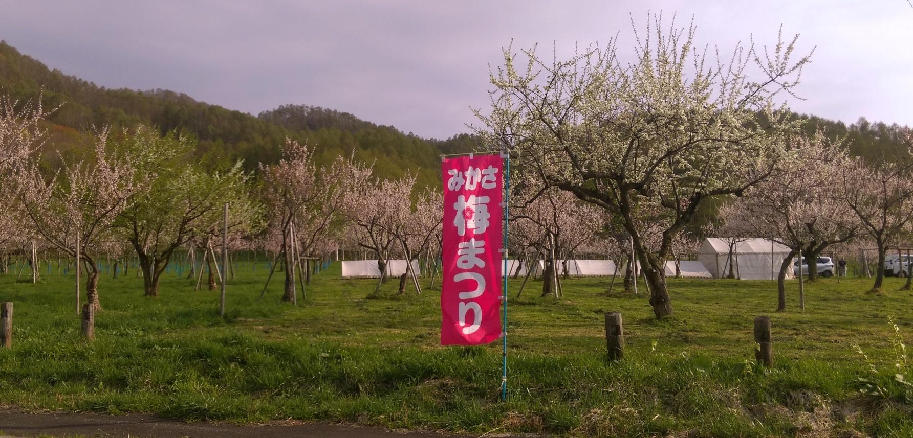梅祭りIMAG0018