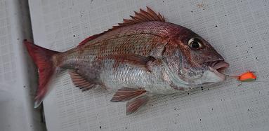 鯛テンヤ622