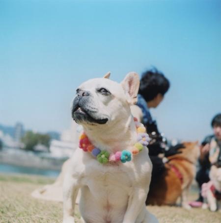TOY-2829_Yashica.jpg