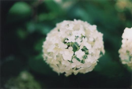 TOY-3001_Canon.jpg
