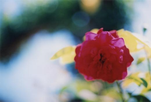 TOY-3005_Canon.jpg