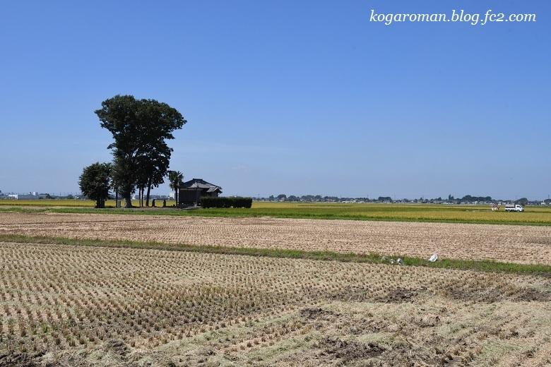 北川辺地域の稲刈り3