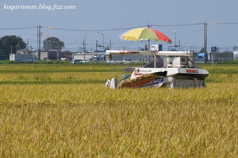 北川辺地域の稲刈り2