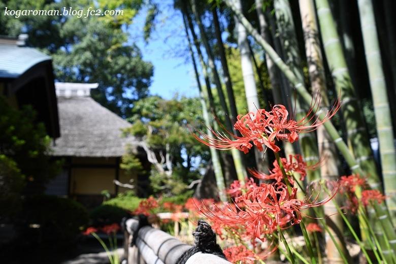 鷹見泉石記念館の彼岸花