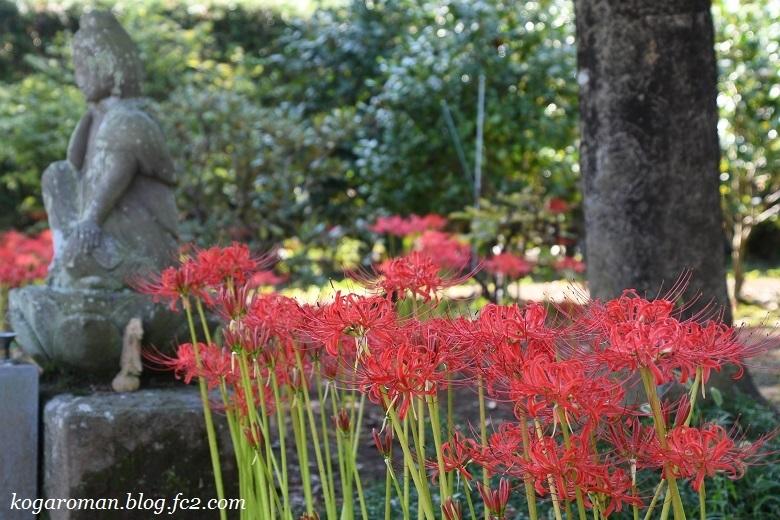 満福寺の彼岸花3