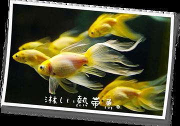 淋しい熱帯魚。33話~