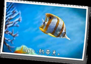淋しい熱帯魚。51 -第2章- ~
