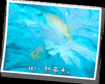 淋しい熱帯魚。85 第3章 ~