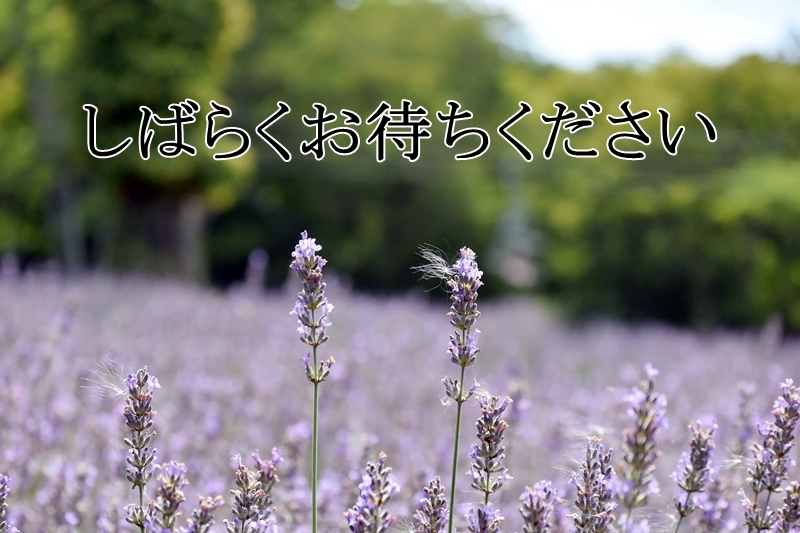 DSC_0065-20180818.jpg