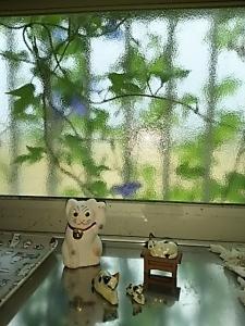 窓のアサガオ