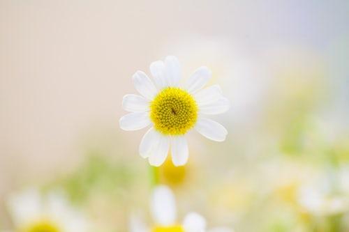 flower2_20180801130902d02.jpg