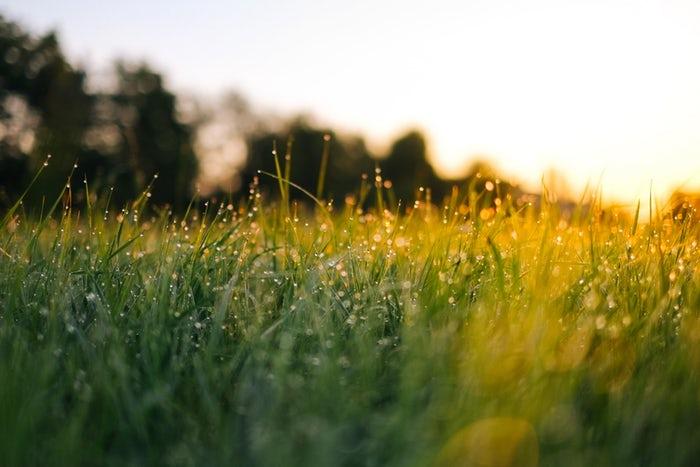 芝生 隣 は 青い の
