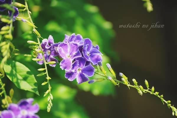 flower190717.jpg