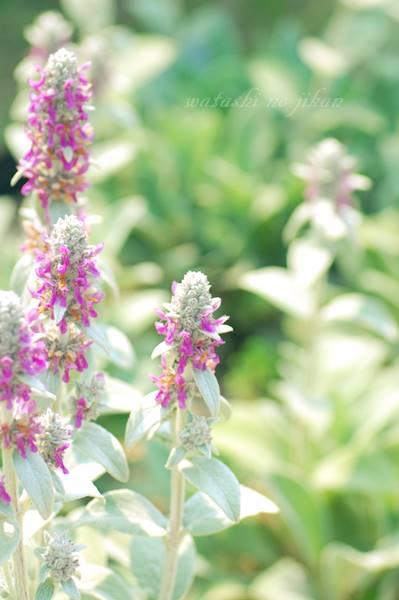 flower20190713.jpg
