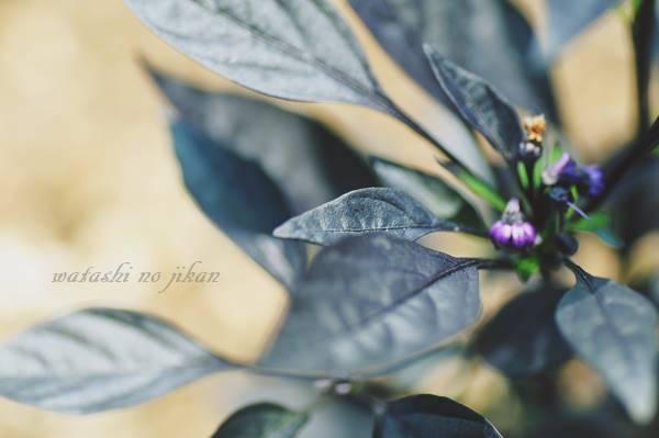 flower20190718.jpg