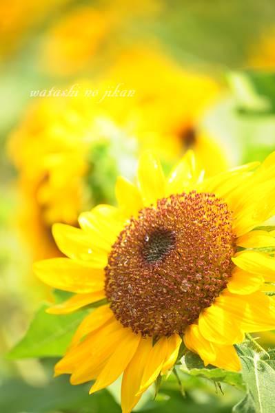 flower20190808.jpg