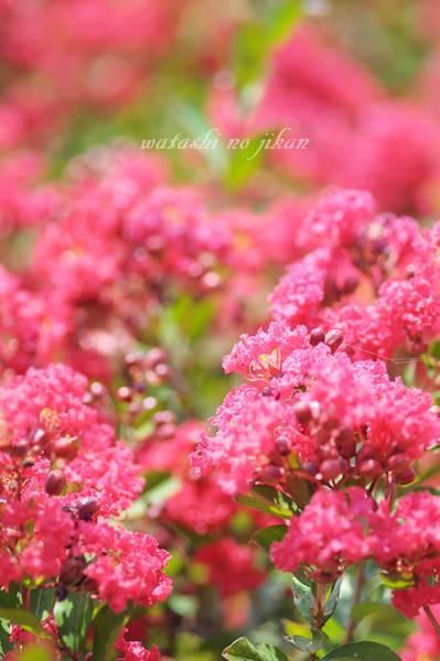 flower20190809.jpg
