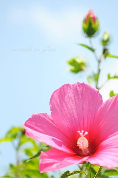 flower20190810.jpg