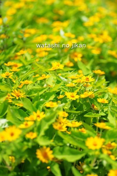 flower20190820.jpg