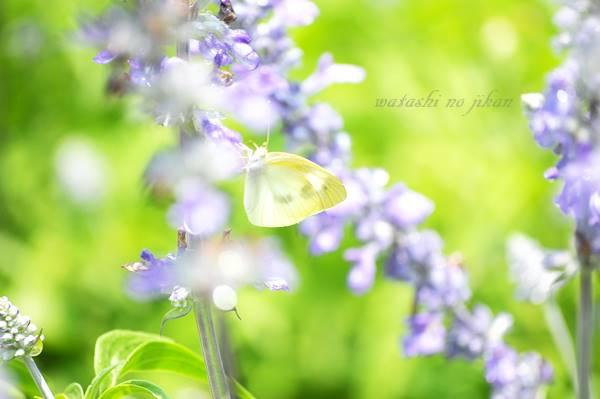 flower20190821.jpg