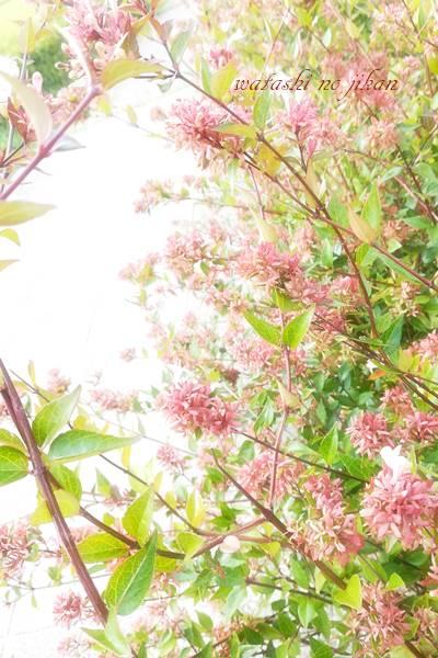 flower20190825.jpg