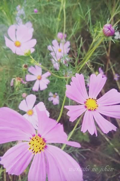 flower20190916.jpg