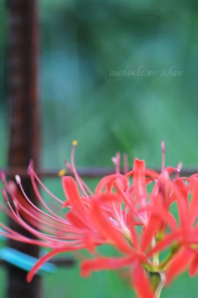 flower20190930.jpg