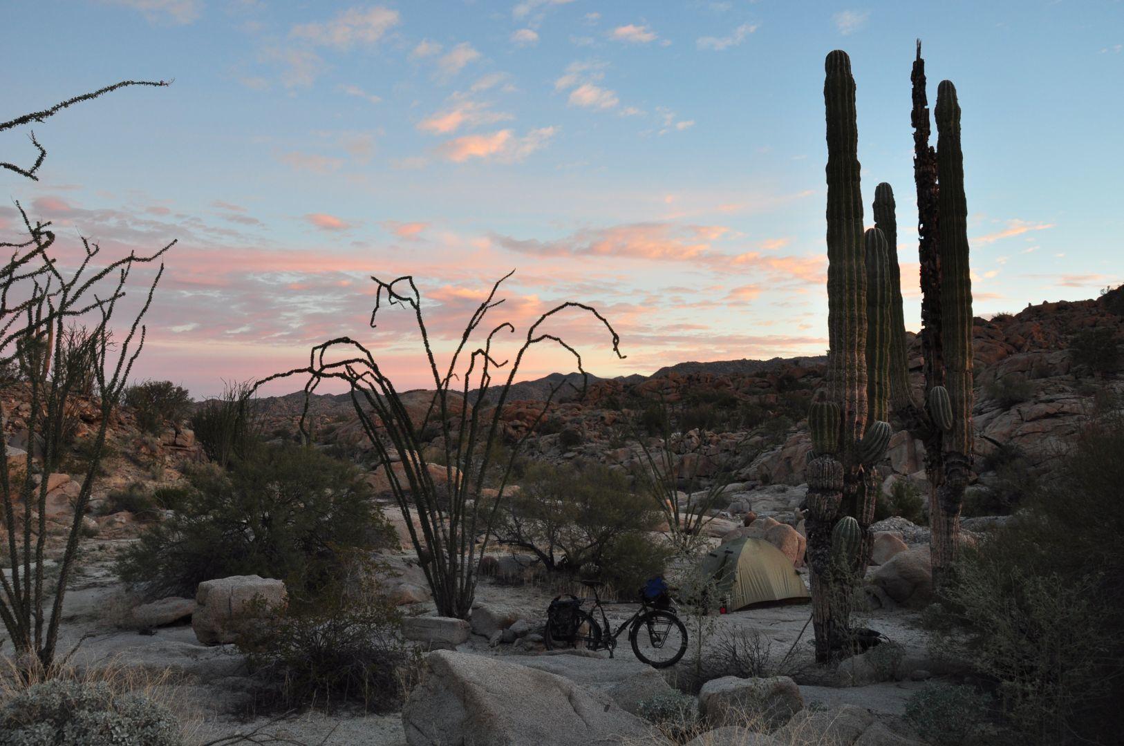 in cactus field