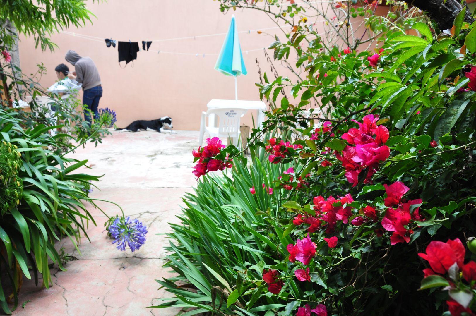 jardin alegre
