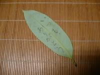 P1180066タラヨウ (640x480)