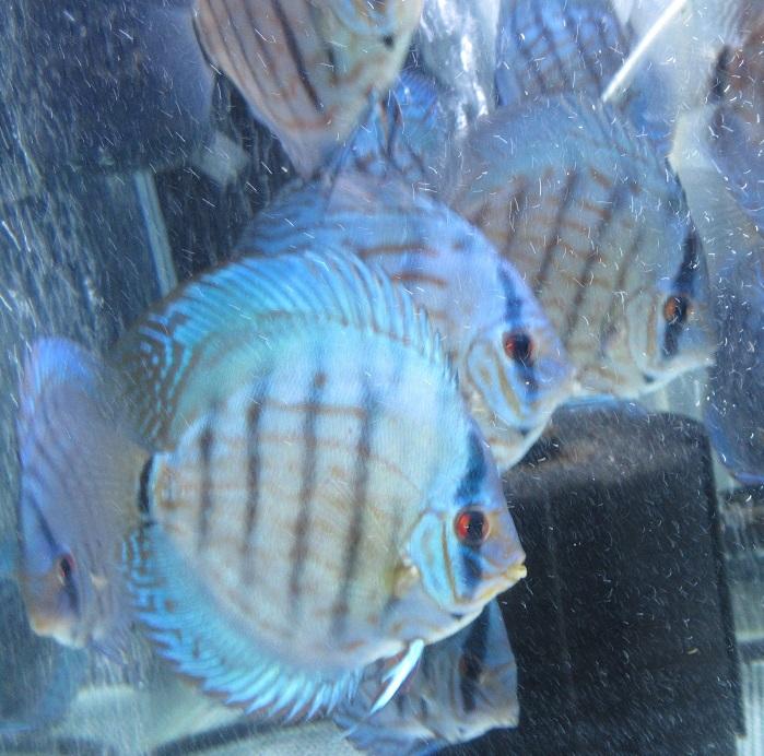 BV7R若魚