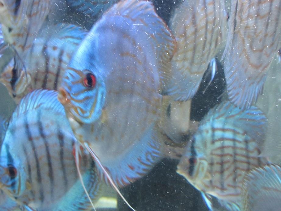 BV7R若魚群