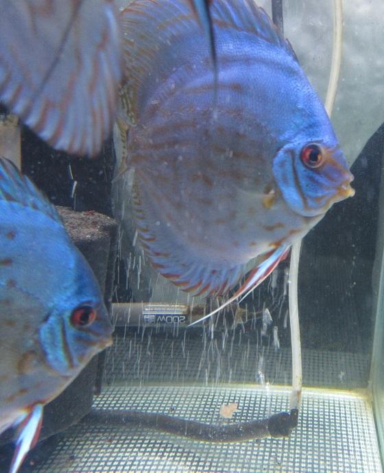 BV7R若魚群2