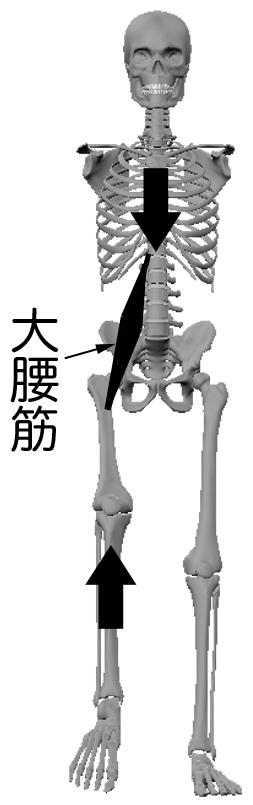 daiyoukin2.jpg