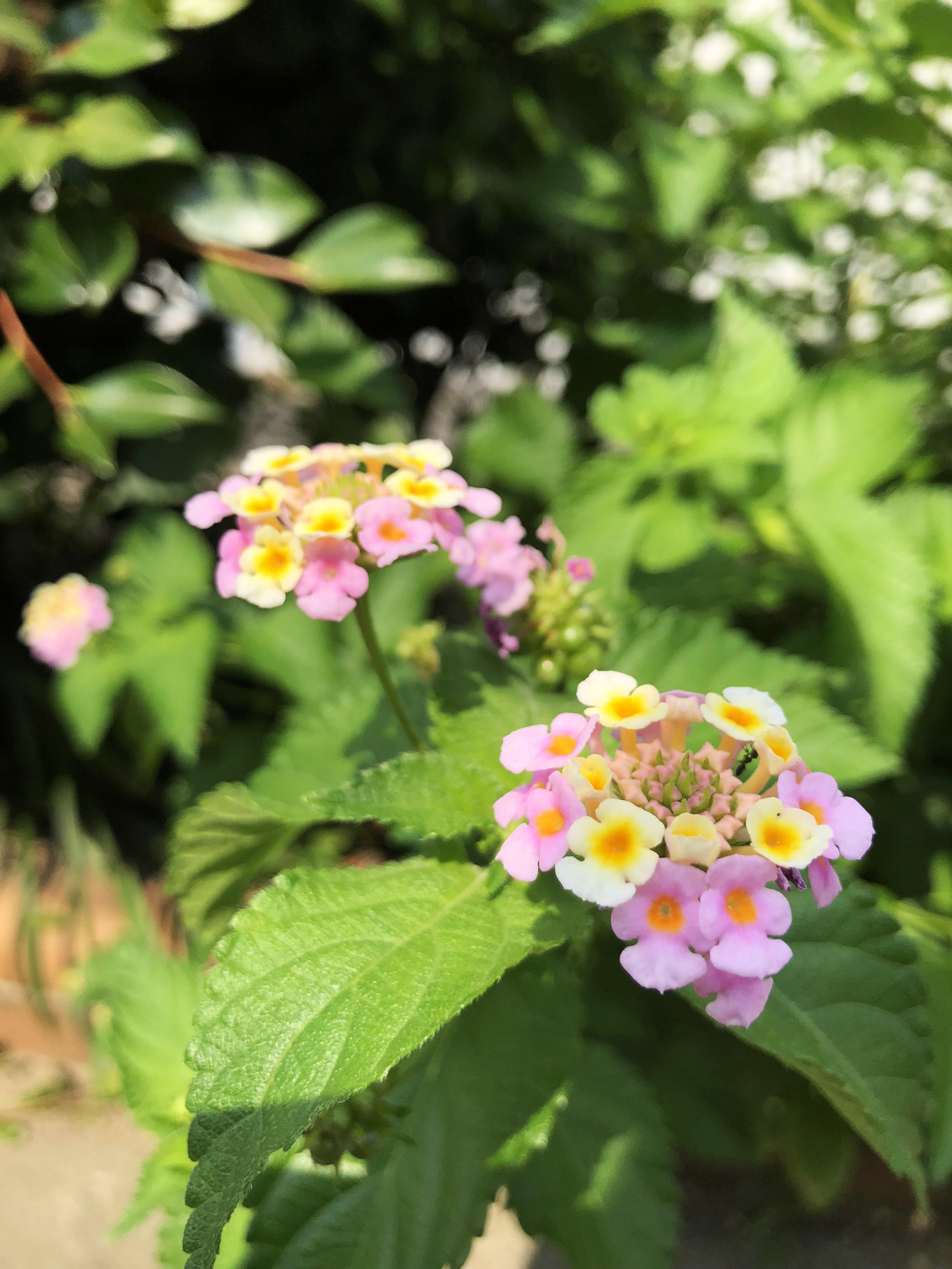 18涼しげな花