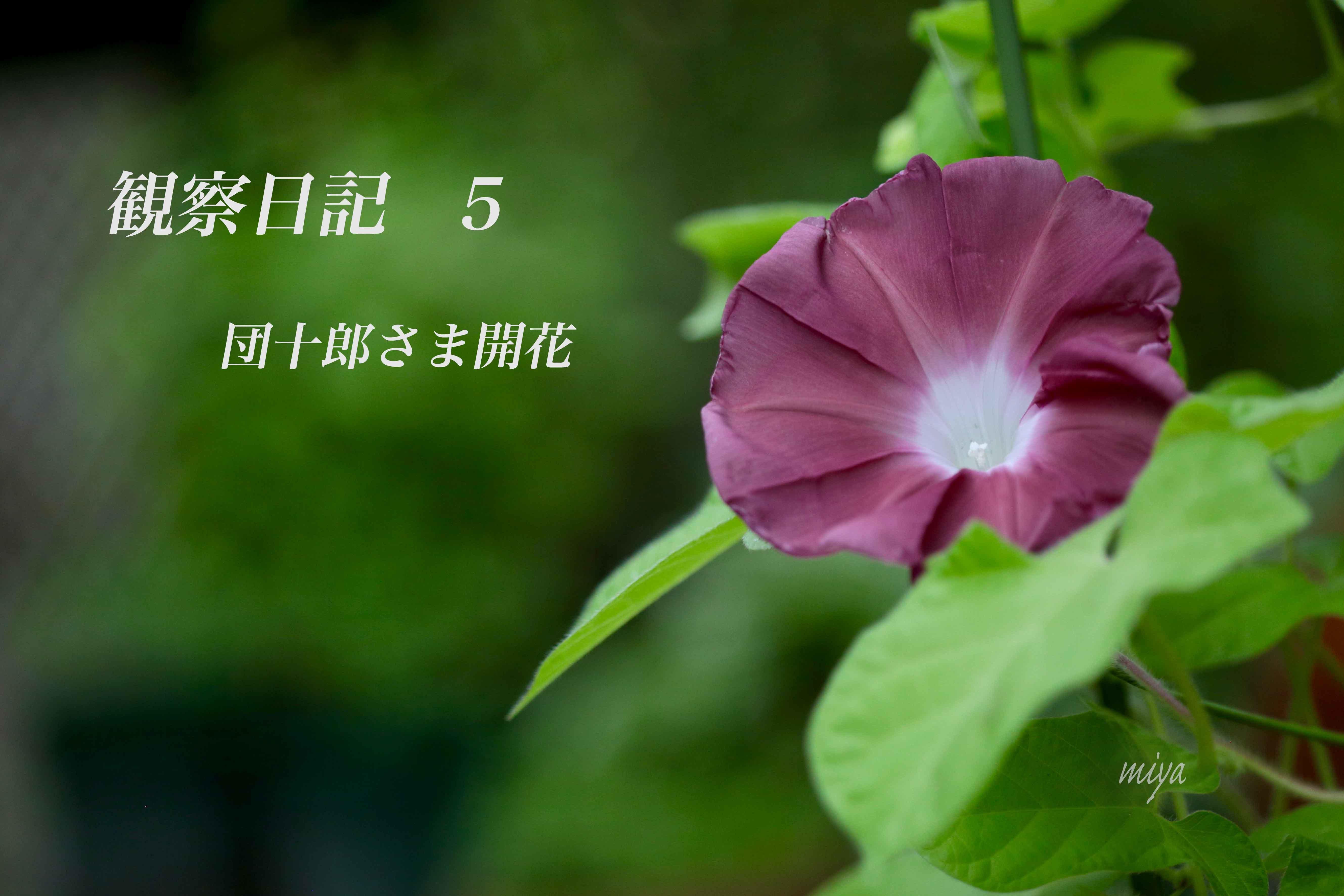 団観察5m032A4393
