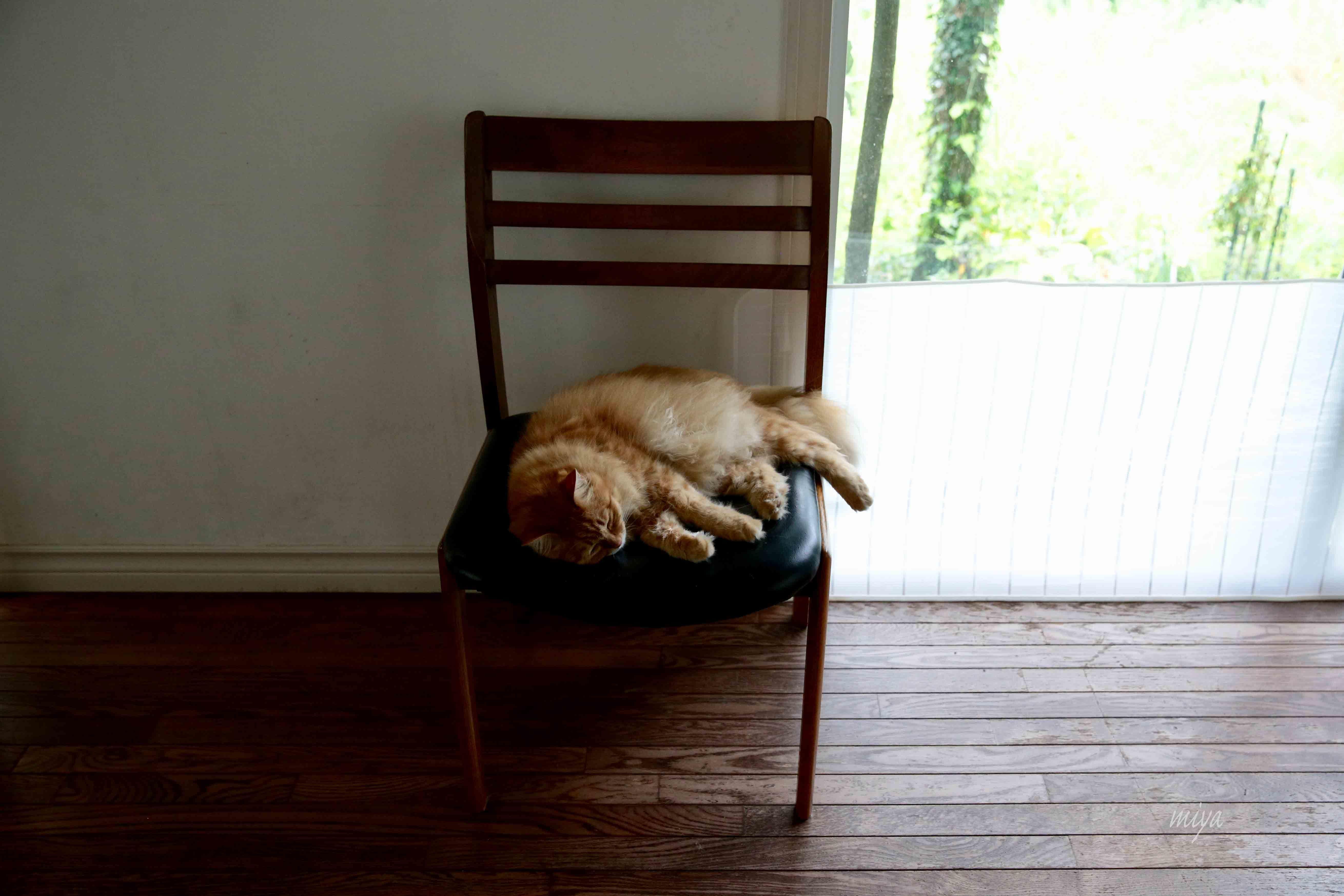 ちゃー椅子m032A5212