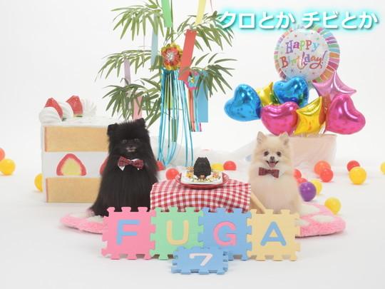 BIRTHDAY_016 FUGA2