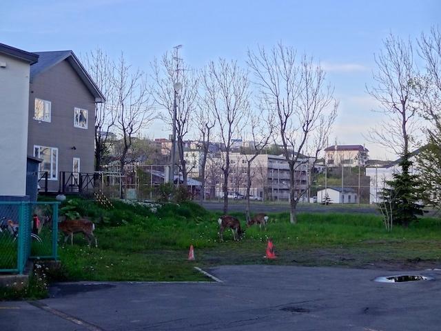 2018.5.25-27 釧路 静内 (105)