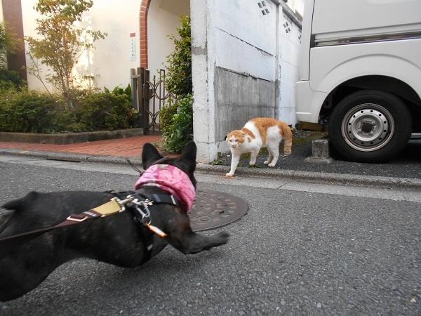 180830猫ちゃん発見!up02