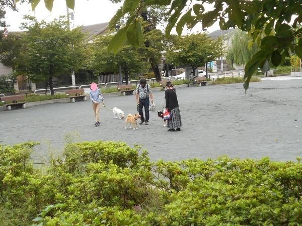180911up03柴犬ズむつきちゃんルルちゃんポンタくんボール遊びしてるので独り占めしちゃうゆずは近寄れず